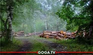ტანას ხეობაში მოსახლეობამ გაჩეხილი ხე-ტყის მასალას მიაგნო