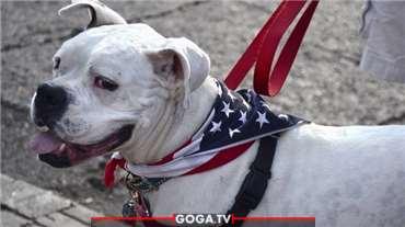 აშშ 100-ზე მეტი ქვეყნიდან ძაღლების იმპორტს კრძალავს