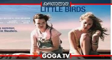 პატარა ჩიტები / Little Birds