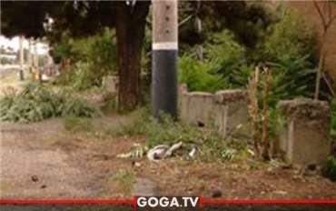 თბილისში, ფიროსმანის ქუჩაზე შუა ხნის კაცი მოკლეს