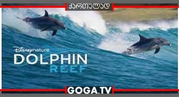 დელფინის რიფი / Dolphin Reef